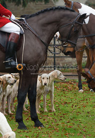 Cottesmore hounds at the meet at Barleythorpe 6/12