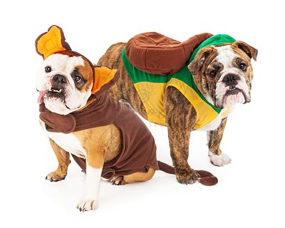 Funny Bulldogs in Halloween Costumes