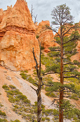 Trees 2- Bryce Canyon, Utah