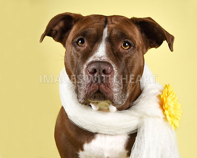 Dog in Scarf with Yellow Flower