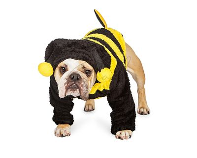 Cute Dog in Halloween Bee Costume