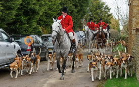 John Holliday and hounds arrive at Springfield Farm