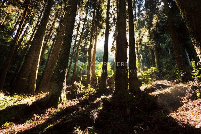site de rencontre blanc noir forest