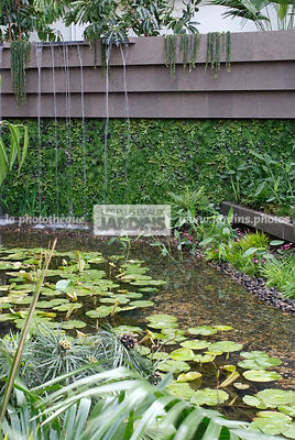 Contemporary garden, Exotic garden, Tropical garden, Water garden, Foliage wall, Green wall, Vegetation wall, water lily, Waterlily
