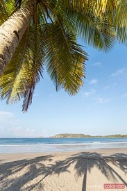Palm tree and sandy beach, Playa Carrillo, Costa Rica