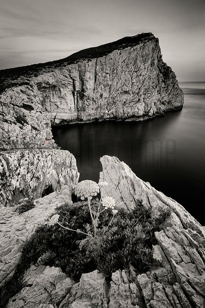 The Great White Cliffs at Capo Caccia at Sunset