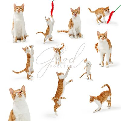 Orange Playful Cute Cate Collection