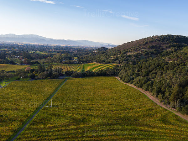 Aerial view of vineyard landscape in Napa Valley