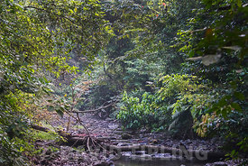 Stream running through tropical rain forest in the Darién National Park Panama