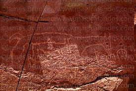 Detail of camelid petroglyphs in San Pedro Valley near San Bartolo, Region II, Chile
