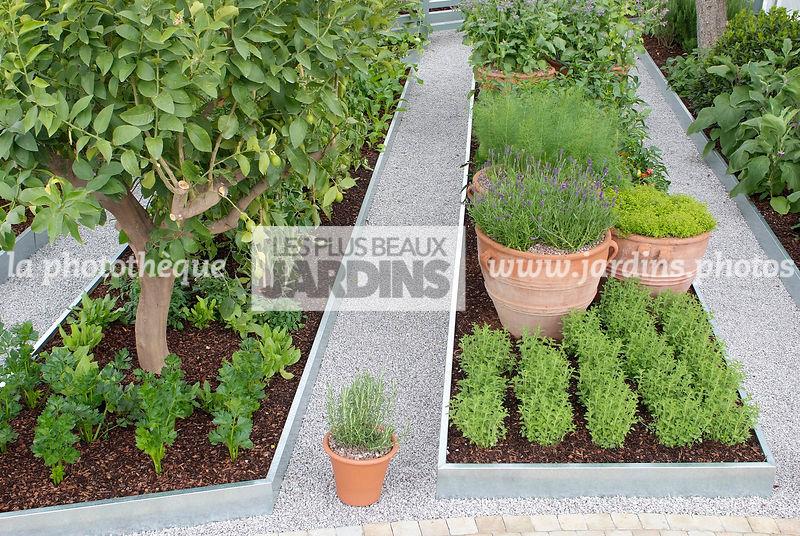 la phototh que les plus beaux jardins petit potager contemporain citronnier c leri. Black Bedroom Furniture Sets. Home Design Ideas