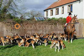 Huntsman John Holliday and hounds - The Belvoir Hunt at Hose