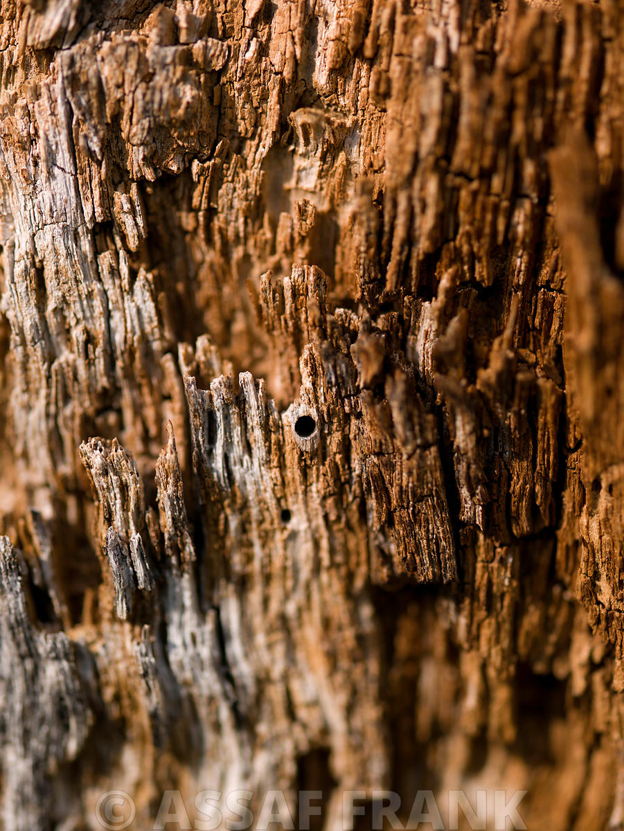 Wood bark close-up