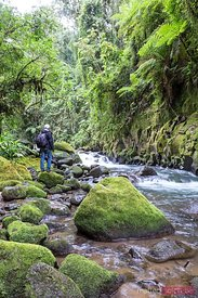 Hiker near a river in the tropical forest of Costa Rica