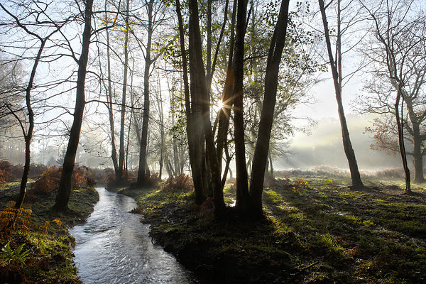ZQ8F5813_Forest_Stream_Misty_Morning_FINAL_NEW_on_6th_Nov_2017
