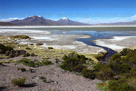 View over Salar de Surire , Region XV , Chile