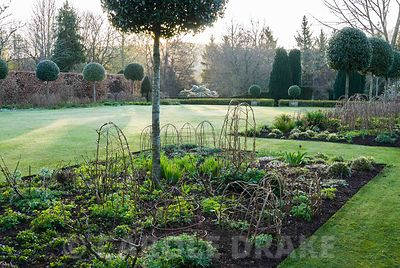 Herbaceous Borders On Each Side Of The Croquet Lawn Feature Standard Holm  Oaks, Quercus Ilex