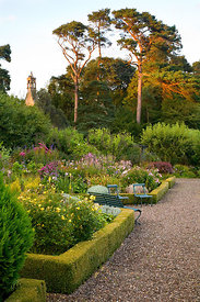 Ruth's Garden looking towards Scots pines and chapel tower bathed in early evening light