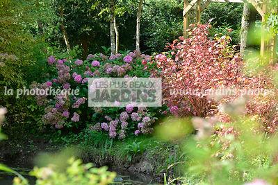 La phototh que les plus beaux jardins plante de terre de bruyere le plus grand choix de - Plante de terre de bruyere ...