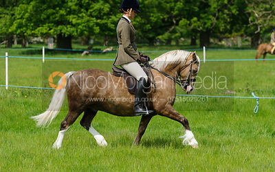 Class 23 - P(UK) Kingsford M&M Large Breeds photos