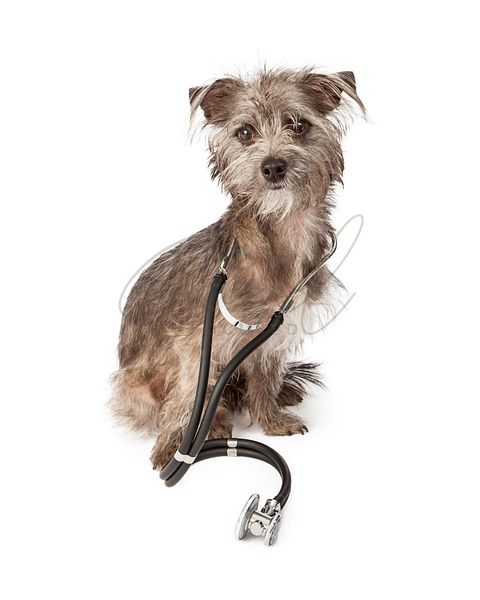 Dog Doctor With Stethoscope