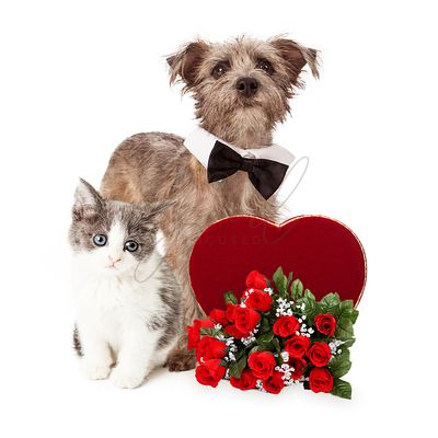Cute Dog and Kitten With Valentines Heart and Flowers