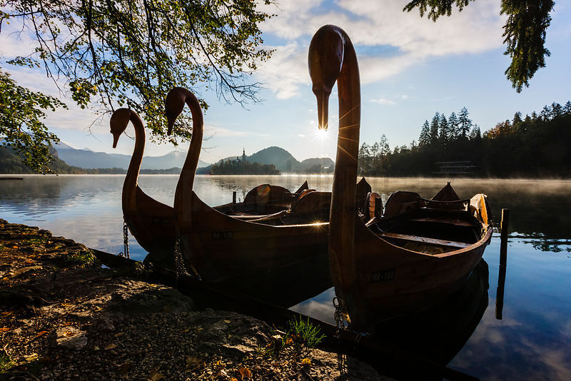 Swan Tour Boats Moored on Lake Bled at Sunrise