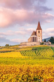 Vineyard and church at sunset, Hunawihr, Alsace, France