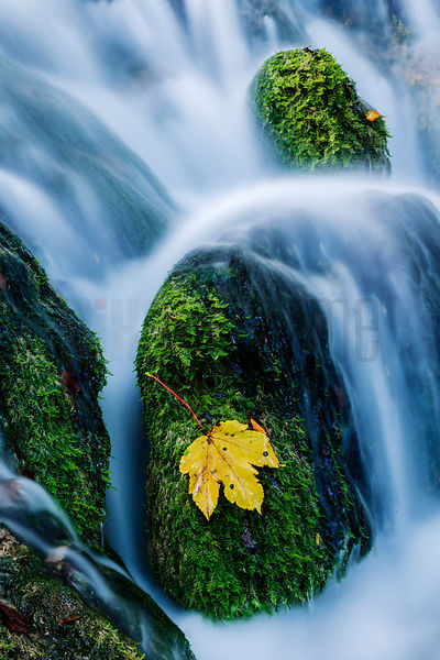 Waterfall and Yellow Leaf