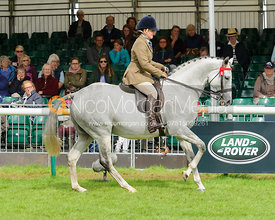 Retrained Racehorse class - Land Rover Burghley Horse Trials, Sunday 4th September 2016