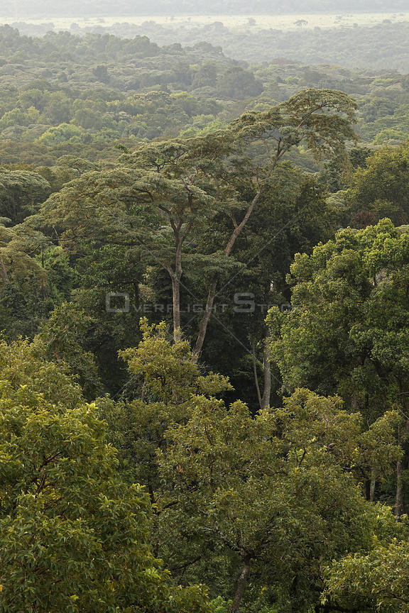 Landscape of Kakamega forest, tropical rainforest, Kenya, July 2017.