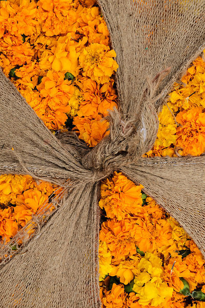 Bundle of Marigolds Tied up in Hessian