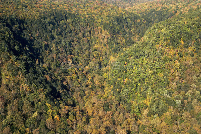 Aerial view of forested watershed at Pine Creek Gorge, Central Pennsylvania, USA