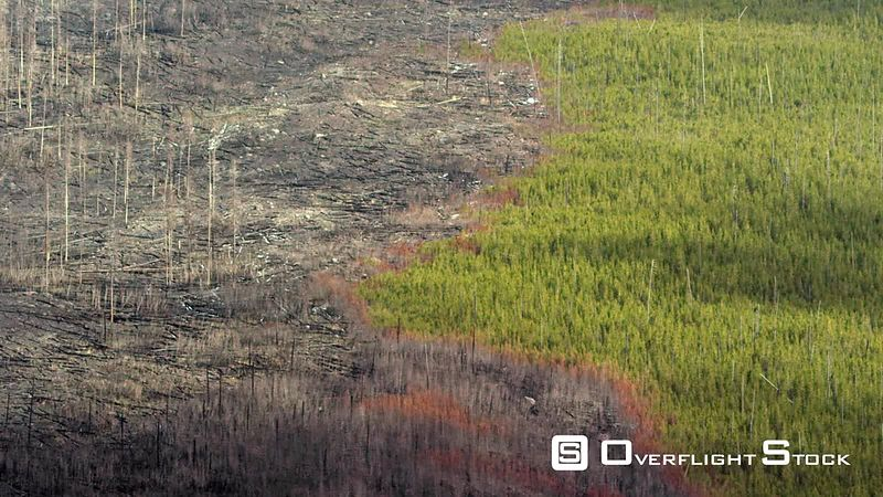 Scars from forest fires create uniqe patterns in the forests of Yellowstone National Park