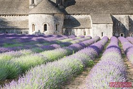 Senanque abbey and lavender field, Provence, France