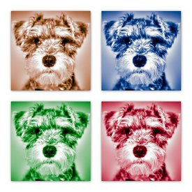 Schnauzer Pop Art Portraits