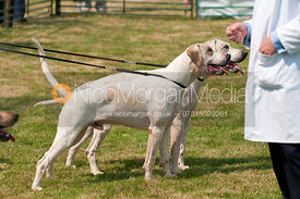 Couple Entered Dog Hounds Class, The Blaston Hound Show 2010
