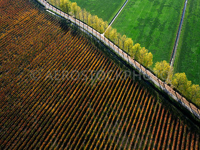 305342 | Lienden, fruit growing and trees in autumn colours in the Betuwe