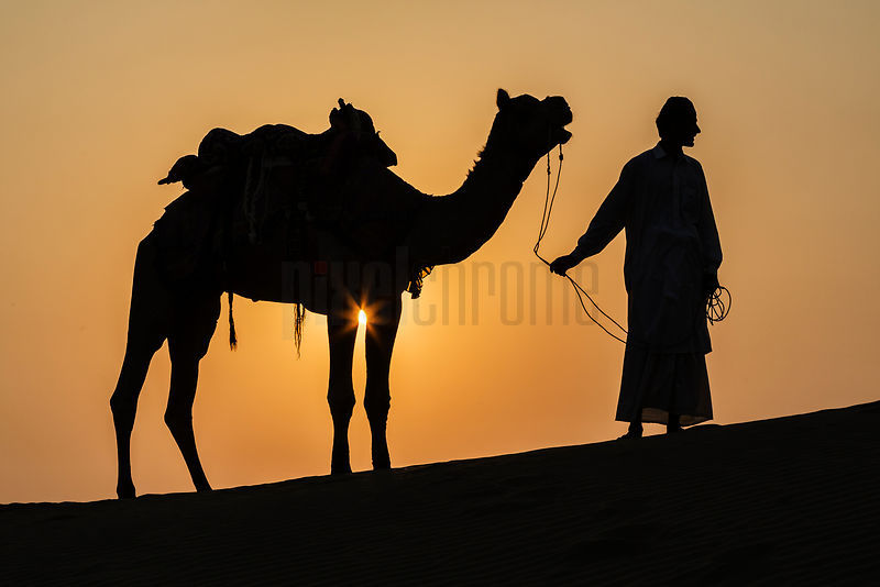 Camel and Driver Silhouetted on Dune