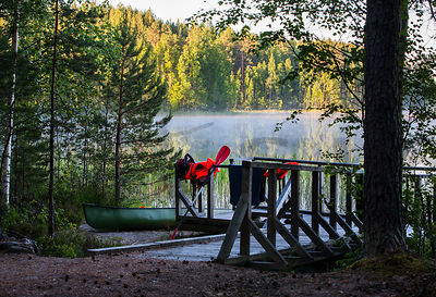 Morning in Leivonmäki National Park