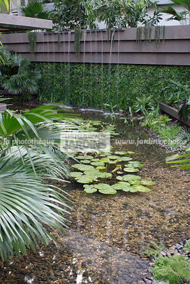 Jardin tropical, Paysagiste : David Cubero et James Wong (Amphibian Designs), CFS, Angleterre