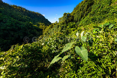 Green vegetation at Reunion Island