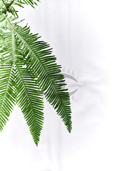 Carbon and fern Photos
