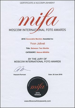 MIFA (Moscow International Foto Awards), 2016
