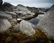 Seaweed and rock