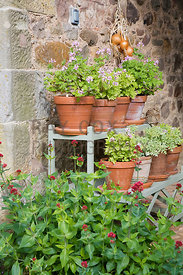 Centranthus  and pots of Pelargoniums in upper courtyard archway
