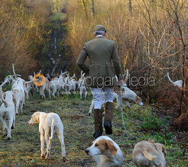 The Cottesmore Hunt at Owston Wood