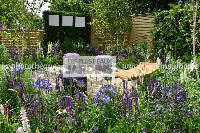 la phototh que les plus beaux jardins jardin champ tre salvia nemorosa 39 caradonna. Black Bedroom Furniture Sets. Home Design Ideas