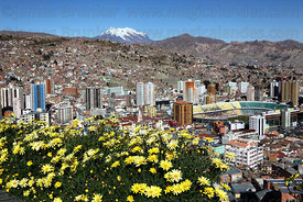 Yellow flowers, Hernando Siles Olympic Stadium, Miraflores district and Mt Illimani, seen from Killi Killi viewpoint, La Paz , Bolivia