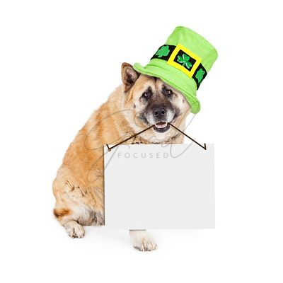 St Patricks Akita Dog Carrying Blank Sign